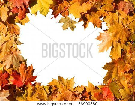 The frame of the autumn colored maple leaves with white background inside.