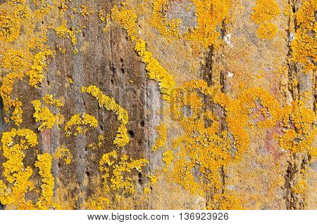 Grey stone covered by yellow lichen forming a natural textured Background.