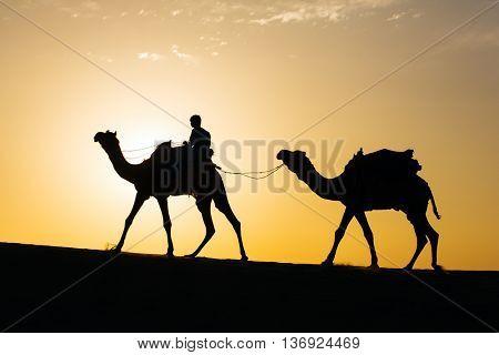 Rajasthan travel background - camel silhouette in dunes of Thar desert on sunset. Jaisalmer, Rajasthan, India