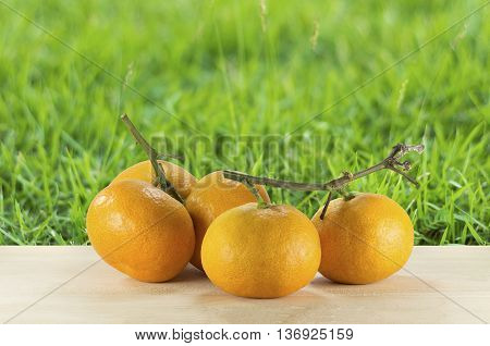 oranges on the wooden table on the green grass background