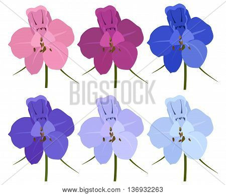 Set of 6 colored flowers. Delphinium flowers. On a white background.
