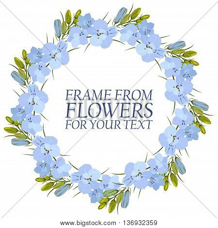 Frame of flowers for text. light blue Flowers Delphinium. Isolated on white background.