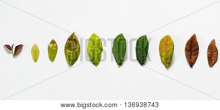 Leaves on white background, concept of cycle of life