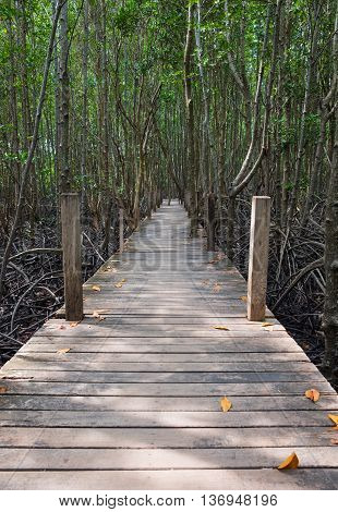 Wooden walkway bridge in mangrove forest located at Prasae Rayong Thailand. This attraction called