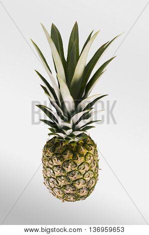 Pineapple. Tropical Fruit. Studio Shoot.
