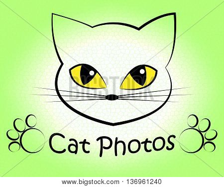 Cat Photos Shows Feline Photographer And Cameras