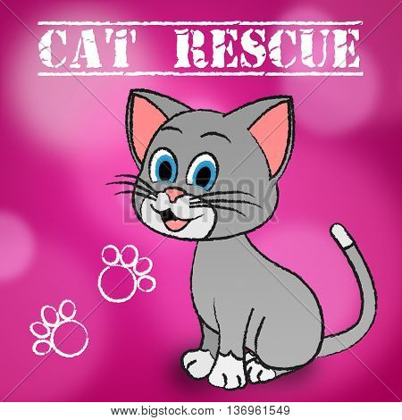 Cat Rescue Indicates Pets Saving And Recovering
