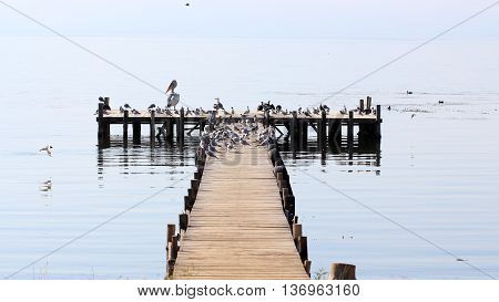 Picture of a Birds on a pier on the lake Prespa Macedonia