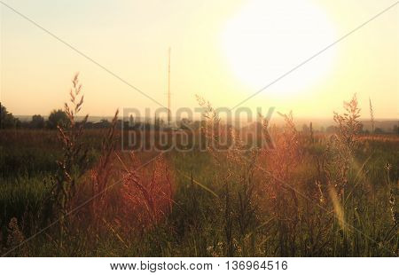 Beautiful evening sunset on the grassy landscape. The sun's rays shine in the face through the tall grass.