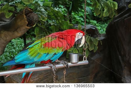colorful parrot sitting on a perch on a background of green foliage