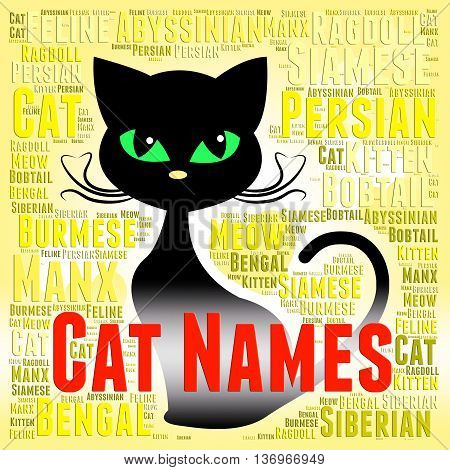Cat Names Represents Pedigree Pets And Felines