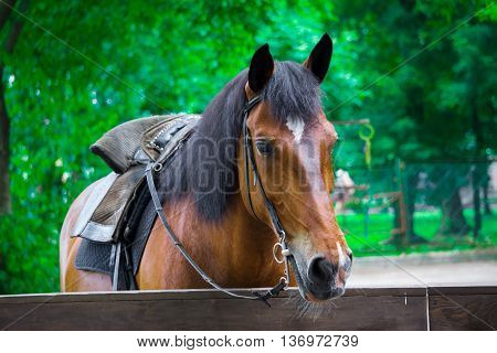 brown horse stands in his stall and resting