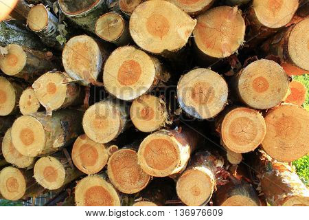 lumber from sawn pines and birches. logs are ready for construction