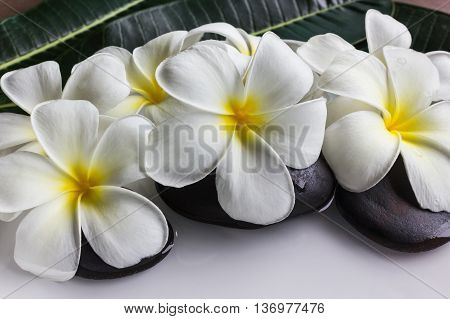 Charm And Harmonious White Flowers Plumeria Or Frangipani On Rock And Water