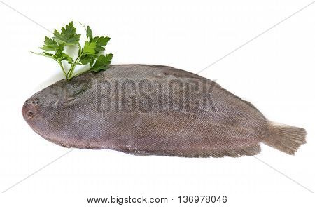 sole fish in front of white background