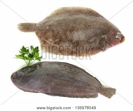 sole fish and lemon fish in front of white background