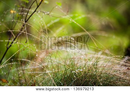 Fresh grass with dew drops close up macro