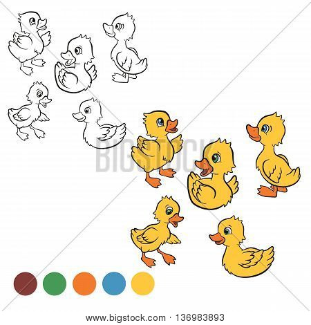 Coloring page. Color me: duck. Five little cute ducklings swim and stand.