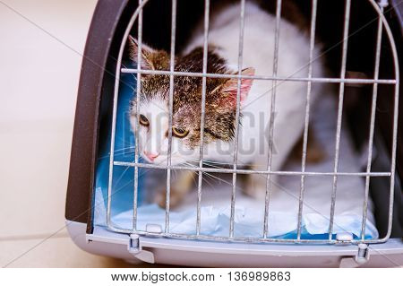 Close up of a little cat in a shelter. A frightened kitten with green eyes staring out from a cage.