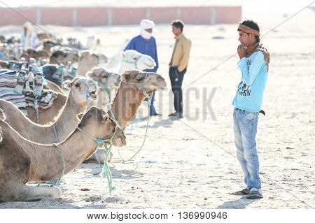 Bedouins With Camels In Sahara