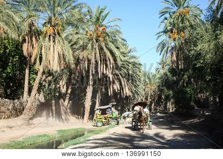 Carriages In Tozeur Oasis