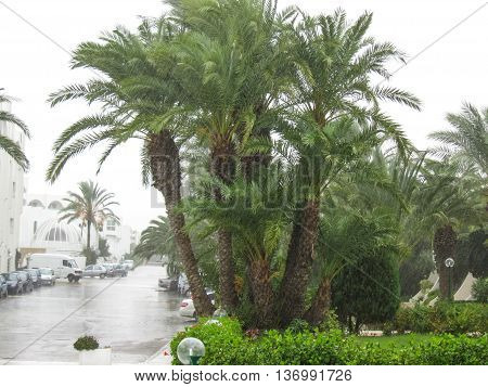 Palm Trees At El Mouradi Hotel Resort