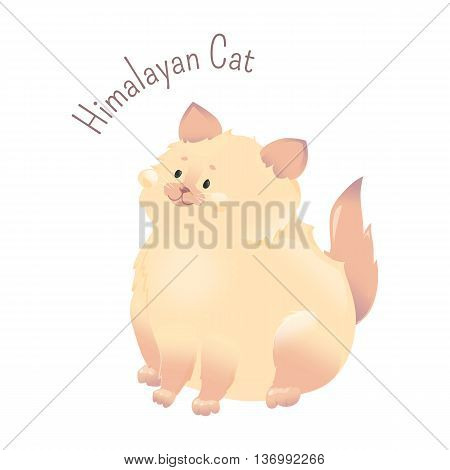 Himalayan Cat isolated on white background. Colourpoint Persian. Long-haired breed. Furry, carnivorous mammal. Part of series of cute cartoon funny kitten species. Child fun pattern icon. Vector