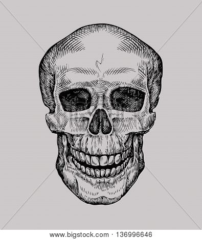 Human skull. Hand drawn Jolly Roger. Sketch death, zombie vector illustration