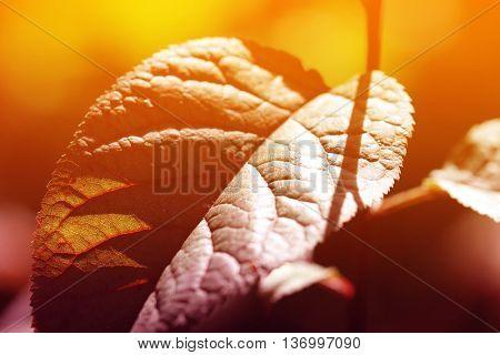 Colored leaf background