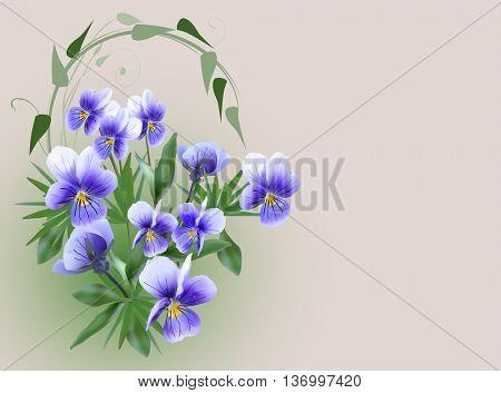 illustration with blue garden violet flowers on light background