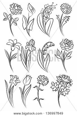 Collection of outlined flowers. Orchid chrysanthemum carnation calla rose tulip lily peony narcissus iris and daisy. Vector illustration