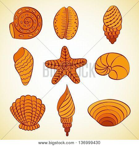 Nautilus shells. Vector backgroun card template design.