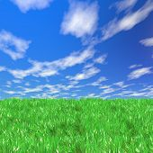 Fresh Green Field On Blue Sunny Sky Background poster