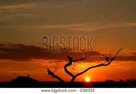 3806 Sunset Tree