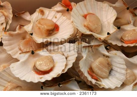 Giant European Scallop (Pecten Jacobaeus) On Market Display