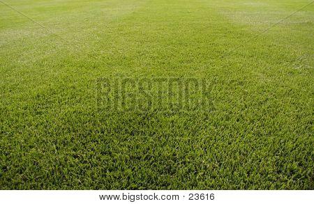 Stadium Grass