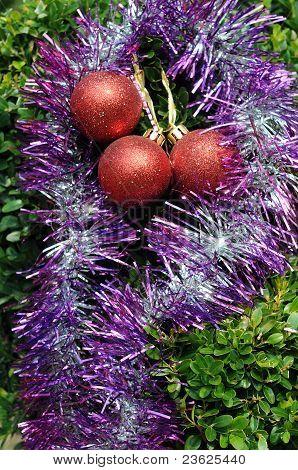 Decoraciones de la Navidad en planta Tropical