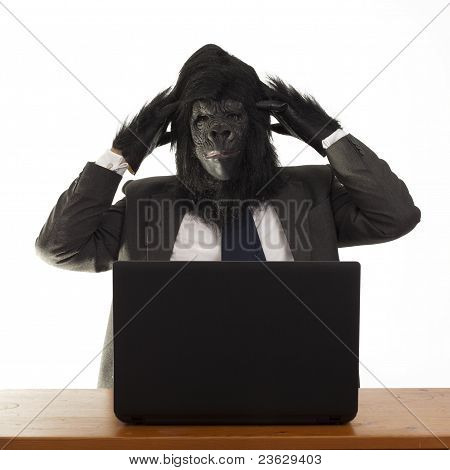 Gorilla looking confused in the office.