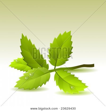 Small branch with green leaves on light background. Raster version.