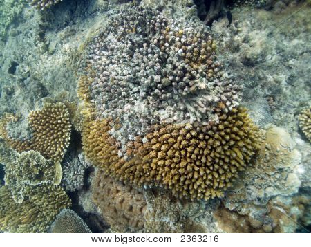 Damaged Coral