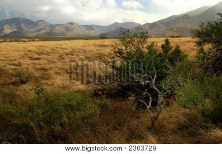 Praire Landscape