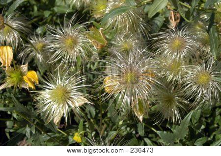 Seeding Flower