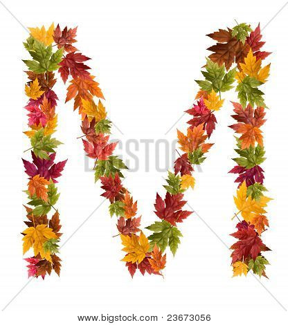 The letter M made from autumn maple tree leaves