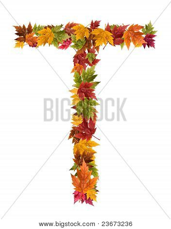 The letter T made from autumn maple tree leaves