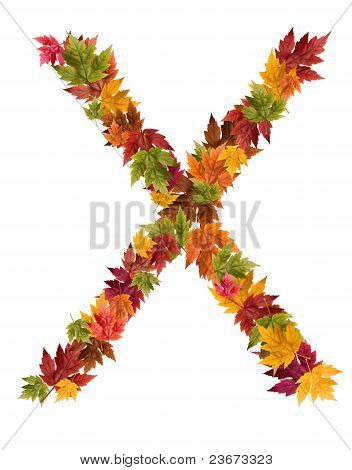 The letter X made from autumn maple tree leaves