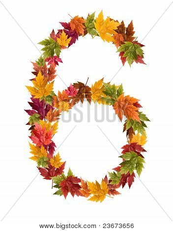 The number 6 made from autumn maple tree leaves