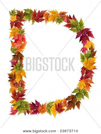 The letter D made from autumn maple tree leaves