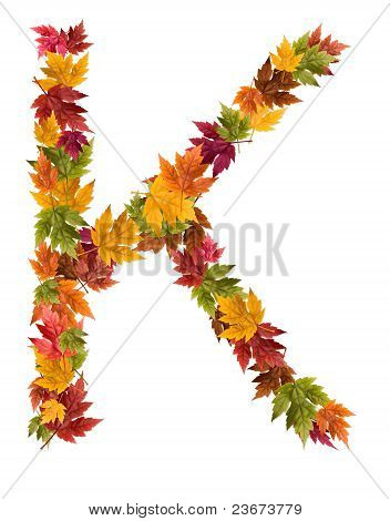 The letter K made from autumn maple tree leaves