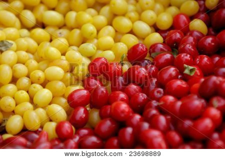Red and yellow Cornelian Cherry - European Cornel fruits - Cornus mas species of dogwood. Eastern Europe, Ukraine.