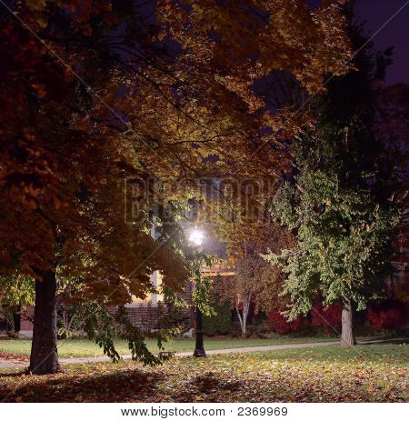 Streetlight And Trees, Early Fall